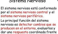 ¿Cuál es la importancia del sistema nervioso?