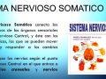 Qué es sistema nervioso somático