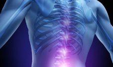 Función de la médula espinal en el sistema nervioso