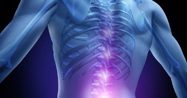 descubre la función de la médula espinal del sistema nervioso
