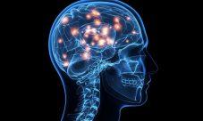 Funciones del sistema nervioso central