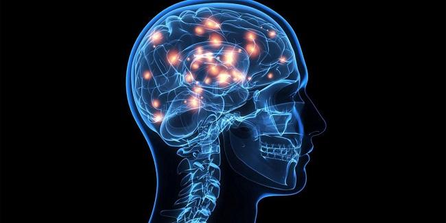 tareas del sistema nervioso central
