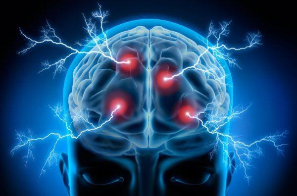 aprende partes del cerebro