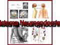 aprende qué es el sistema neuroendocrino