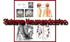 Qué es el sistema neuroendocrino